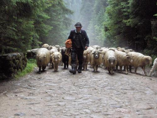 W Dolinie Chochołowskiej #Tatry