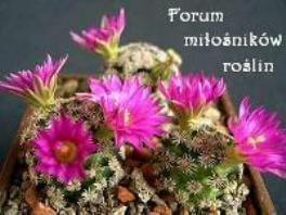 Forum  Strona Główna