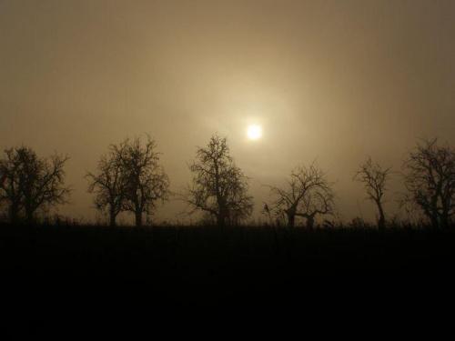 Polna droga #wschód #wschody #niebo #krajobrazy #słońce #jesień #mgła #droga #drzewa #spacery