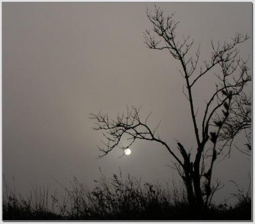 Czekając na dzień #wschód #wschody #niebo #krajobrazy #słońce #jesień #mgła #droga #drzewa #spacery