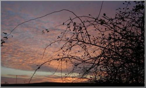 Zaraz wstanie słońce #wschód #wschody #niebo #krajobrazy #słońce #JesieńDrzewa #spacery
