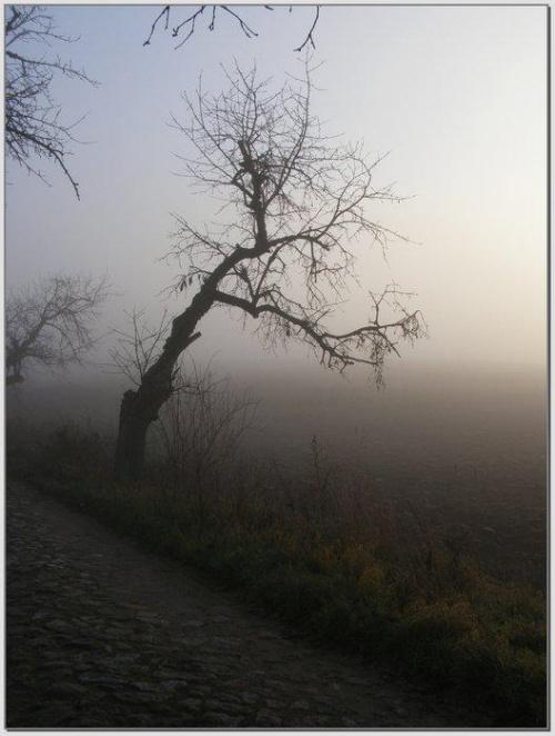 Czekając na słońce #wschód #wschody #niebo #krajobrazy #słońce #JesieńDrzewa #spacery #mgła #droga